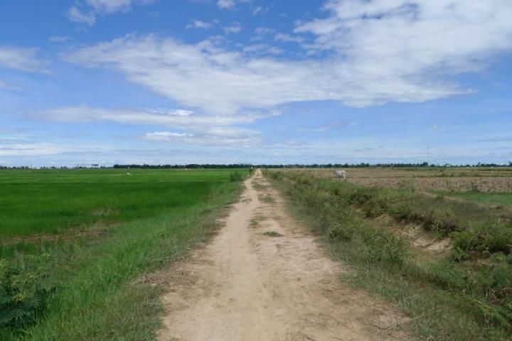 Field Camboida