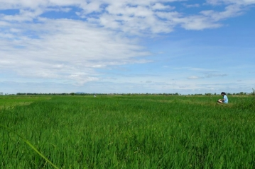 In field.jpg